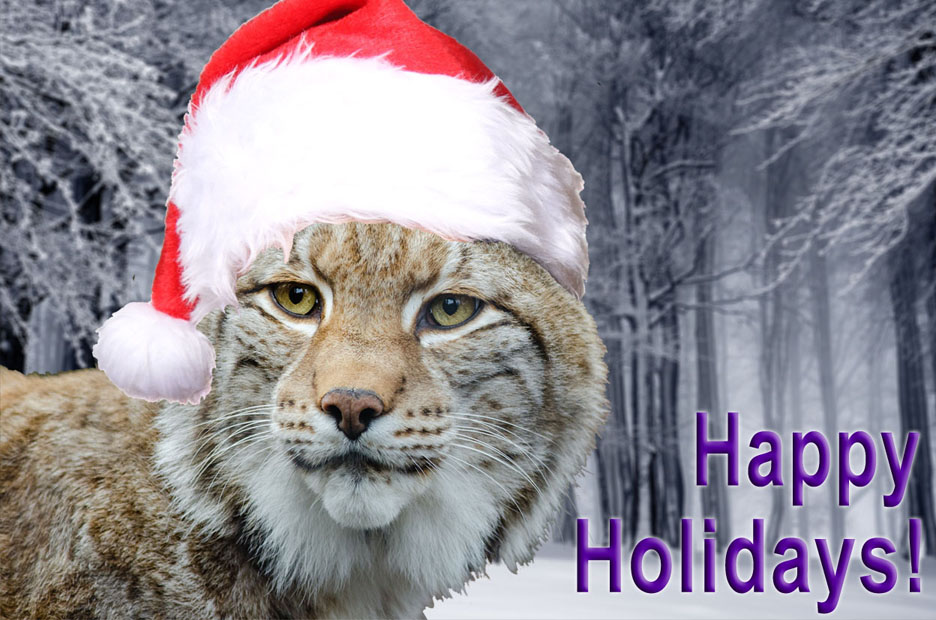 Lynx Holiday Image