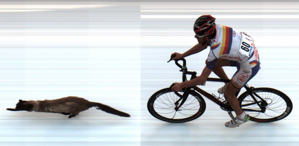 cat animal photo finish image